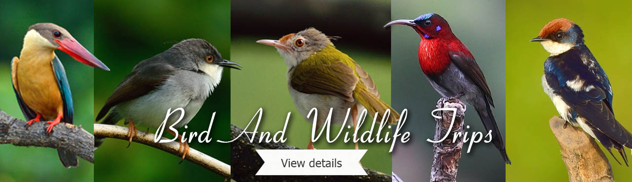 Bird and Wildlife trips
